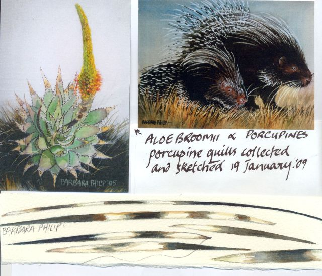 Porcupines & Aloes