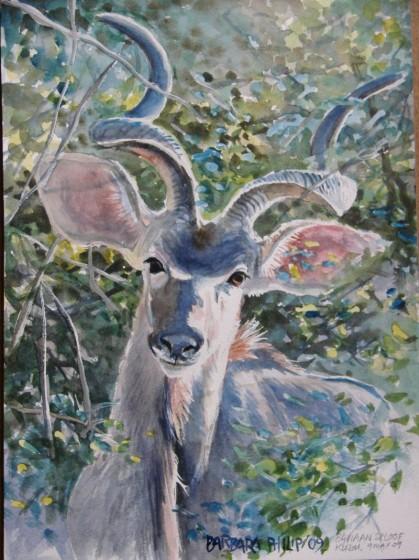 Kudu painting. Baviaanskloof. watercolour