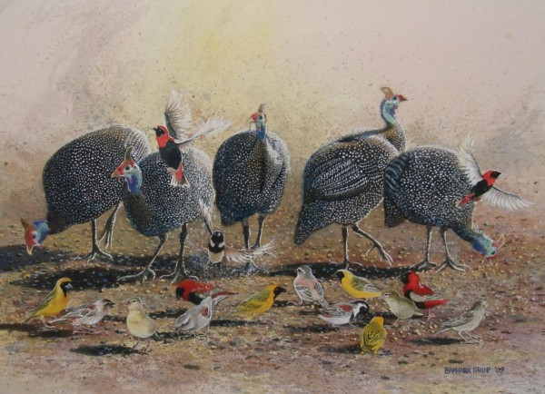 Guinea Fowl and Weavers. painting