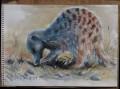 meercat painting
