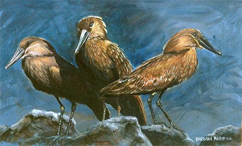 Hamerkop painting