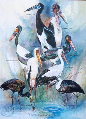 Storks of South Africa. watercolour.  500 x 700 mm. sold.