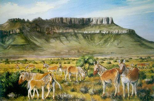 Camdeboo Quagga painting