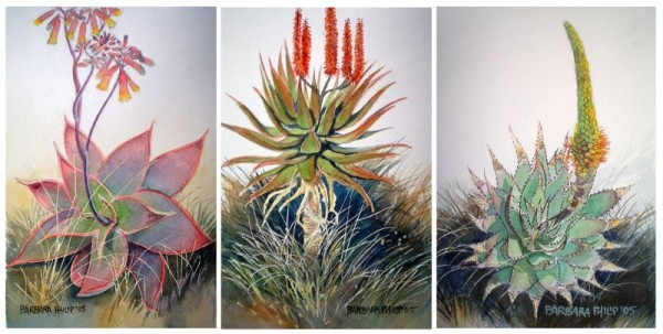 Painting of 3 Aloes of South Africa