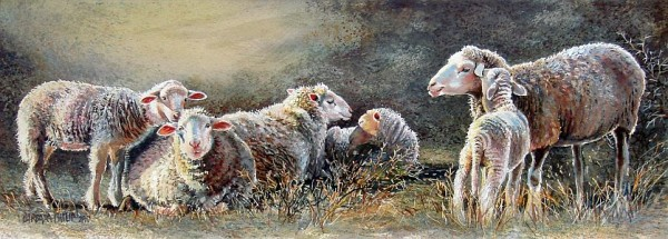 Painting of sheep. Early Morning.