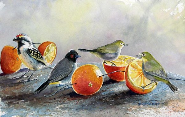 Painting of birds. Acacia Pied Barbet, Redeyed Bulbul & Cape White-eyes