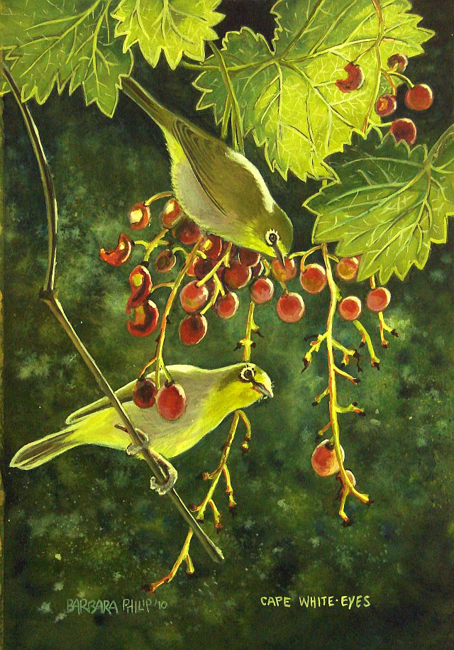 Painting of Cape White-eyes eating Grapes