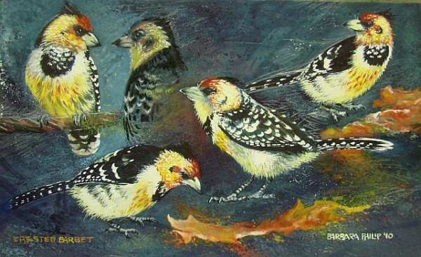 Painting of Crested Barbets