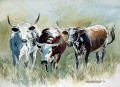 Nguni cattle study. watercolour