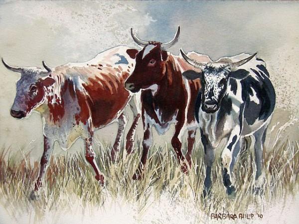 Nguni cattle, watercolour