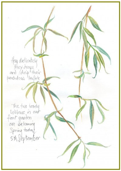sketch of willow branches