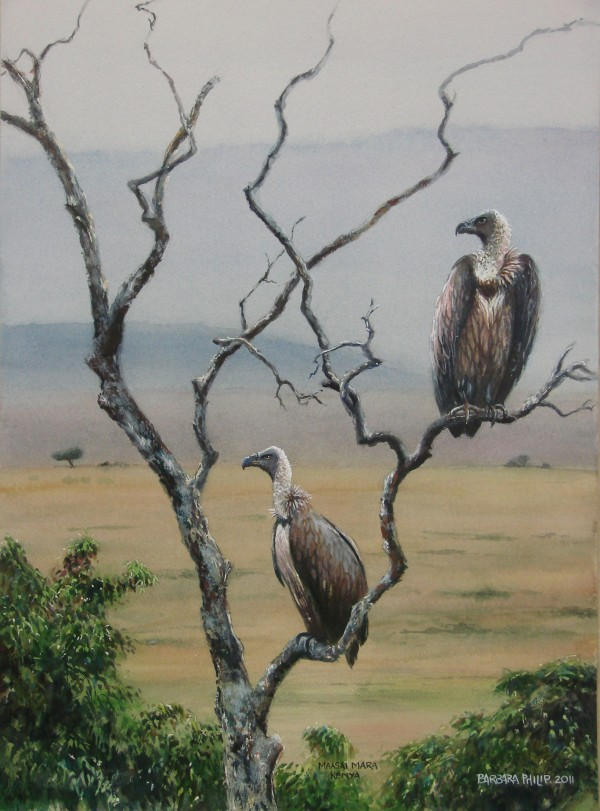 Maasai Mara Whitebacked Vultures