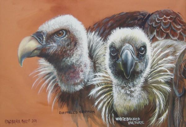 Rueppell's Griffon & Whitebacked Vulture