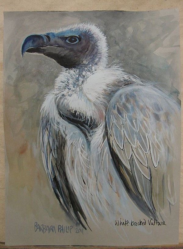 Sketch of Whitebacked Vulture