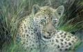 Serengeti leopard