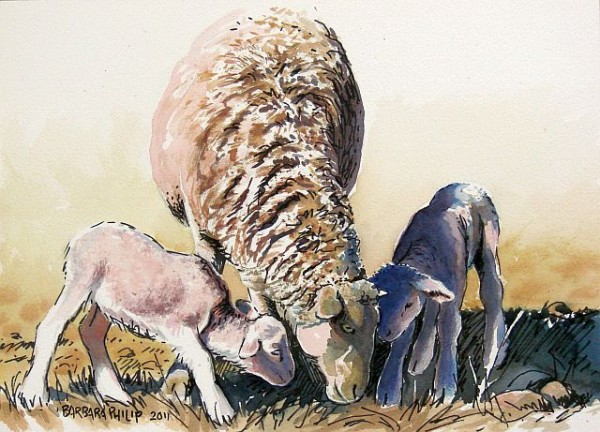 """Ewe with twins sketch"""