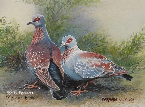 2 rock pigeons