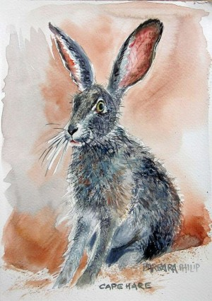 Cape Hare study 1