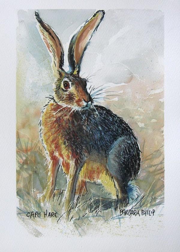 Cape Hare study 3