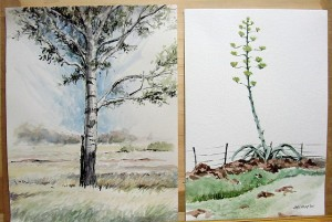 John's ink and watercolour drawings of a poplar tree, and an agave.