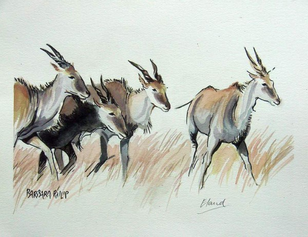 Four Eland. Pen & wash sketch.