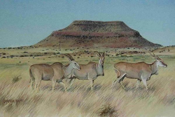 Kruger's Kop with 3 Eland