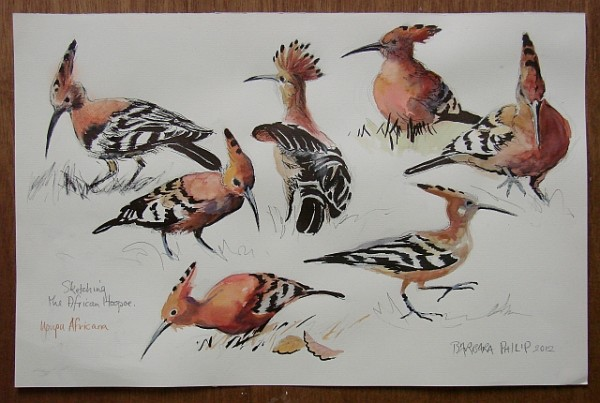 African Hoopoes