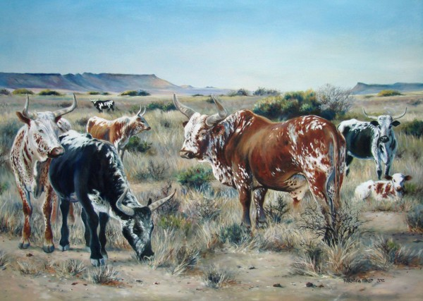 Nguni cattle.