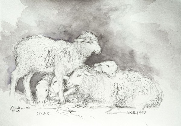 Lamb Siesta