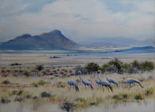 Blue Cranes & Karoo Landscape