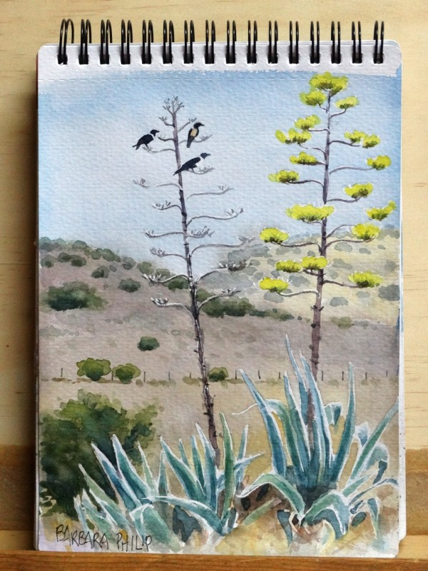 Crows on Agaves
