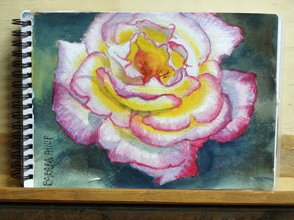Rose. 'Sheila's Perfume'.