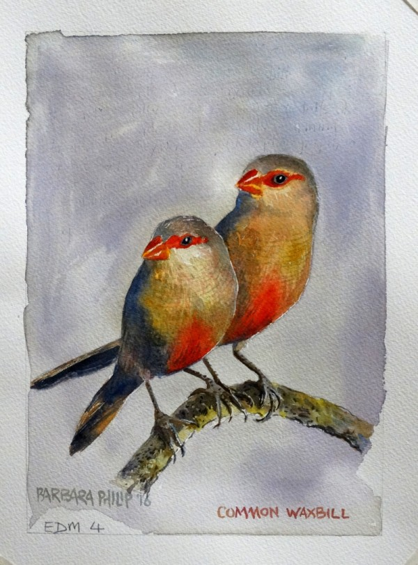 Waxbills, common