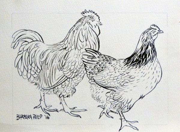 Colour-in yourself, farm fowls.