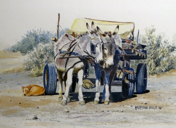 Donkey Cart and salt bush.