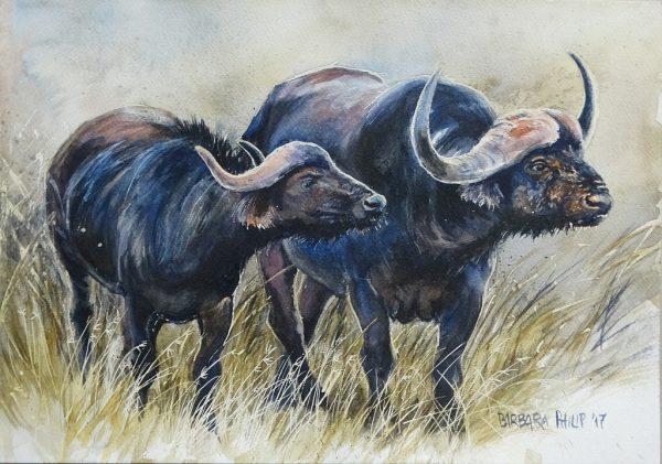 Buffalo Watercolour