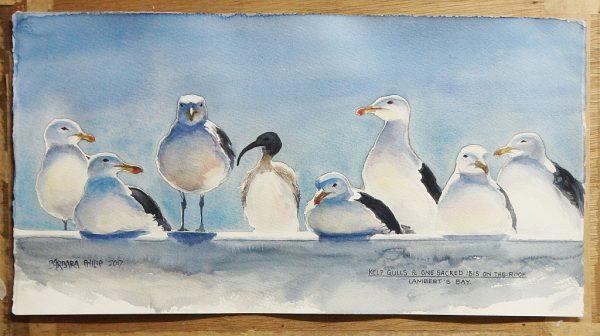 Seabirds, Lambert's Bay. SA