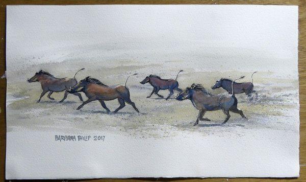Running Warthogs.
