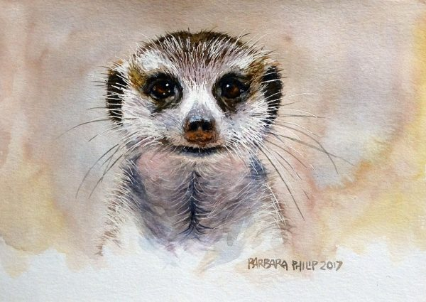 Meercat, wildlife portrait.