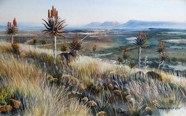 Aloe Ferox, E. Cape. SA