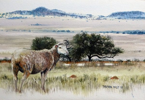 Karoo farm with single sheep