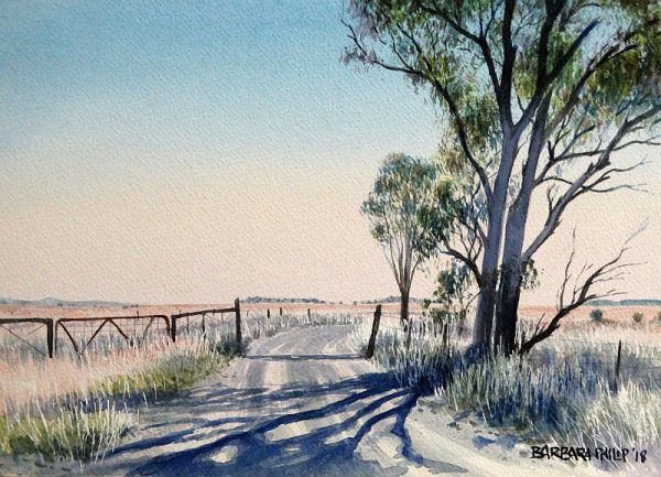 Eucalyptus tree and shadows on farm road.