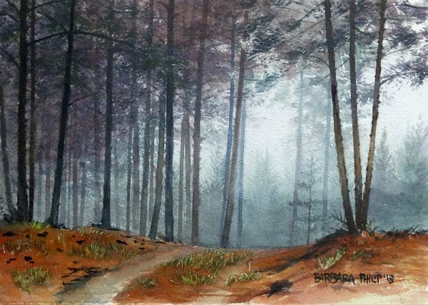 Road through the pine Forest, Buffelskloof,