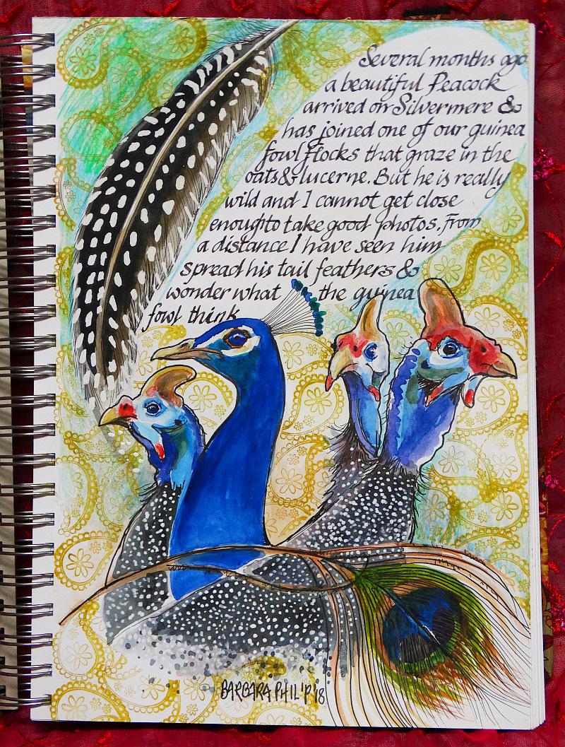 Guinea fowl & Peacock