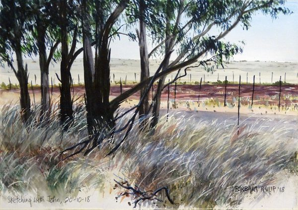 Eucalyptus trees in the grass