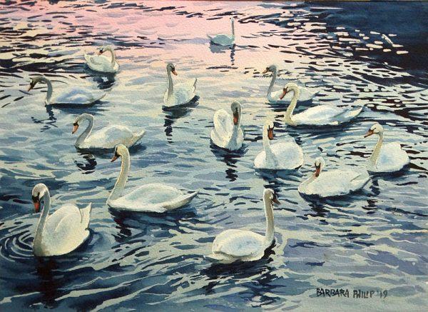 Swans. Lecco, Lake Como. Italy