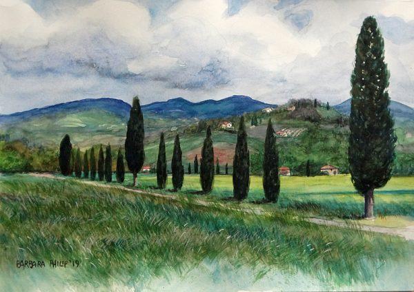 Tuscany cypresses
