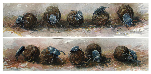 Dung Beetles painting