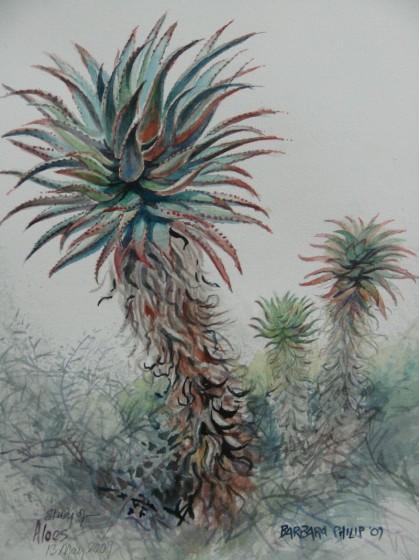 Aloe painting.