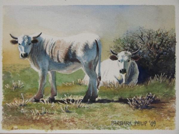 Painting of white Nguni cattle.